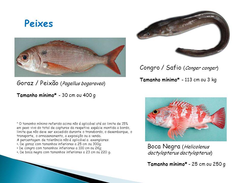 Peixes Congro / Safio (Conger conger)
