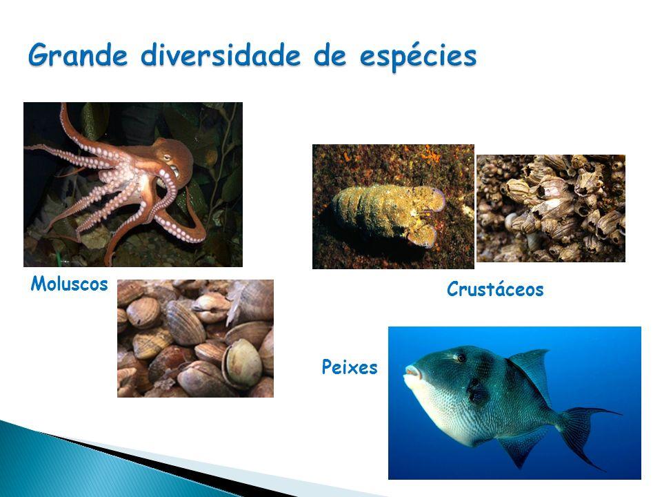 Grande diversidade de espécies