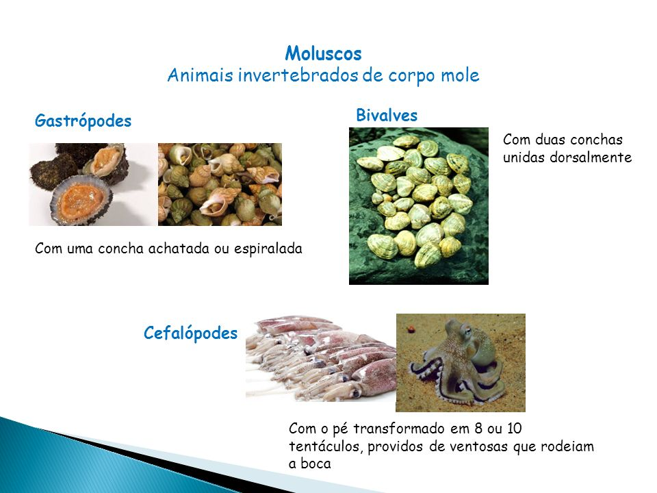 Animais invertebrados de corpo mole