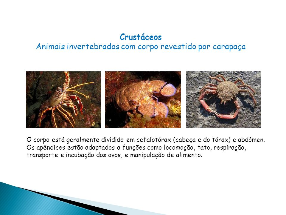Animais invertebrados com corpo revestido por carapaça