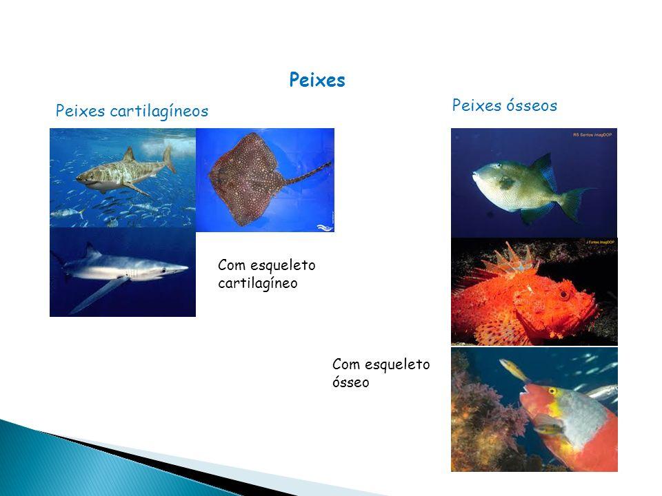 Peixes Peixes ósseos Peixes cartilagíneos Com esqueleto cartilagíneo