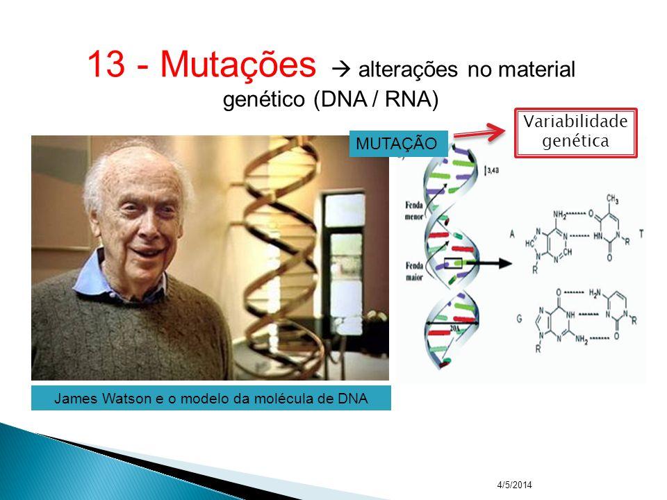 13 - Mutações  alterações no material genético (DNA / RNA)