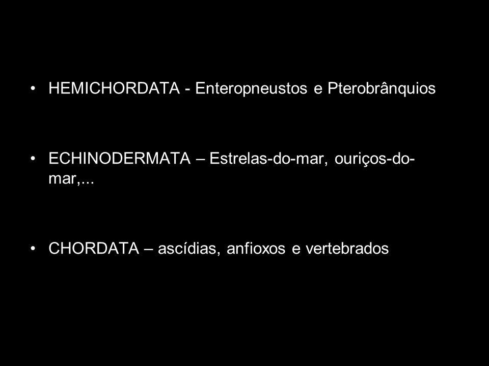 HEMICHORDATA - Enteropneustos e Pterobrânquios