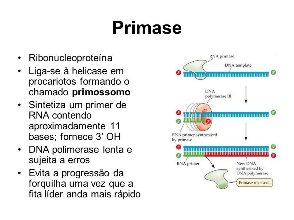 Primase Ribonucleoproteína