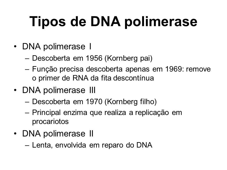 Tipos de DNA polimerase