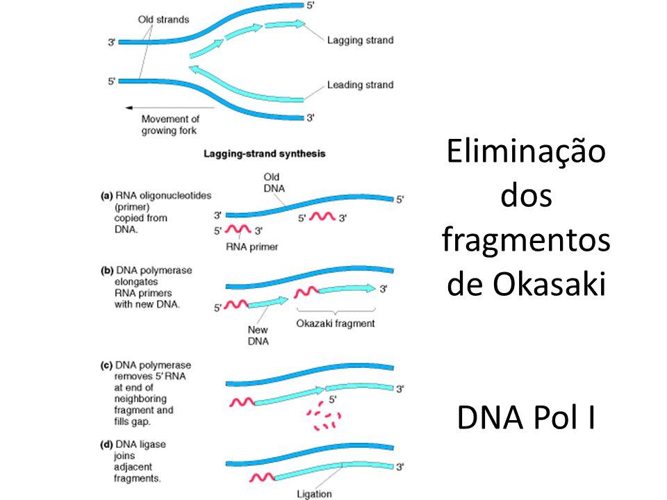 Eliminação dos fragmentos de Okasaki