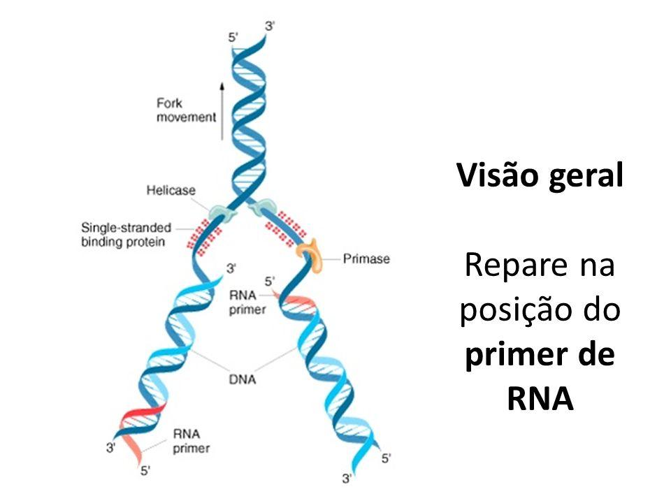 Repare na posição do primer de RNA