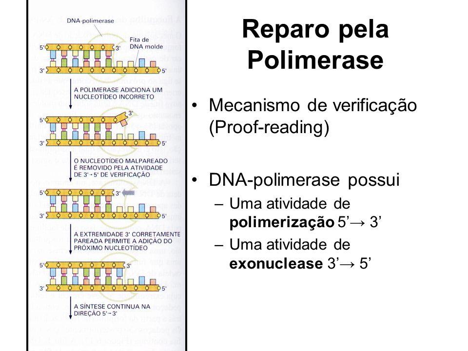 Reparo pela Polimerase