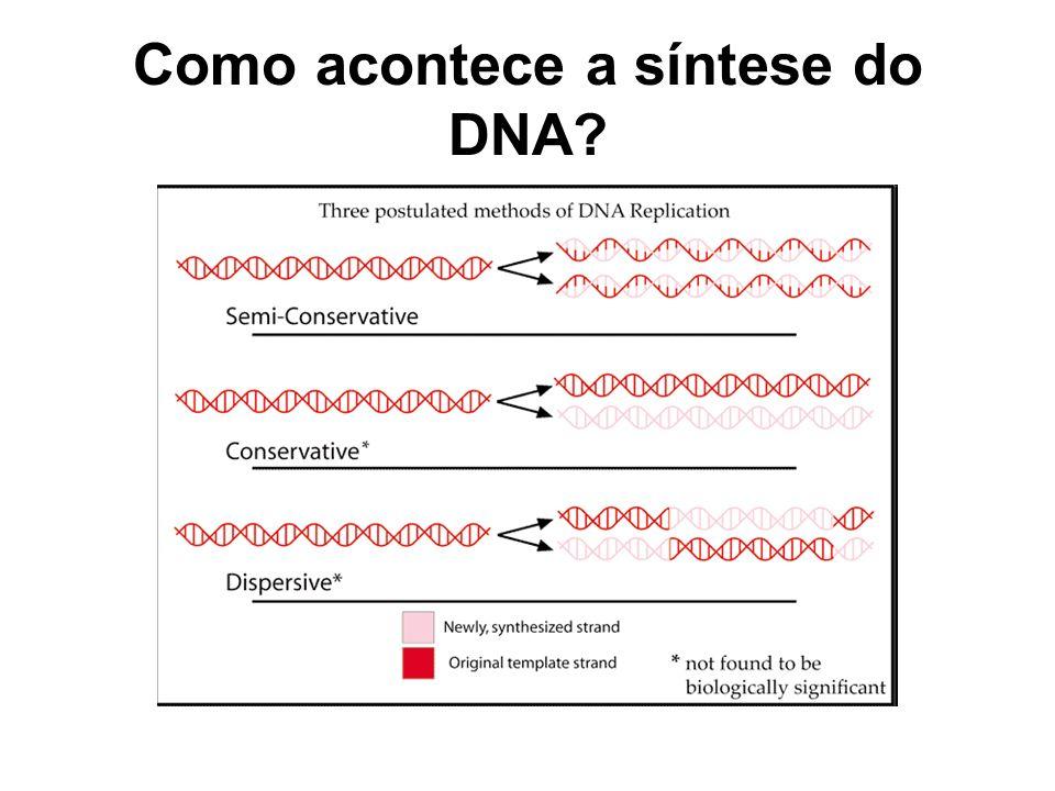 Como acontece a síntese do DNA