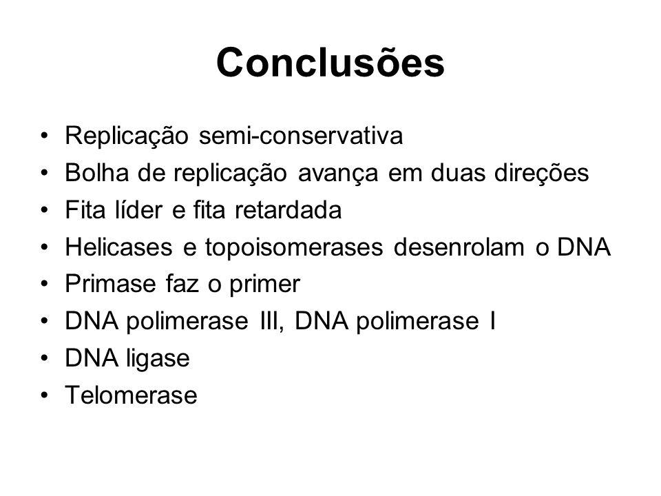 Conclusões Replicação semi-conservativa