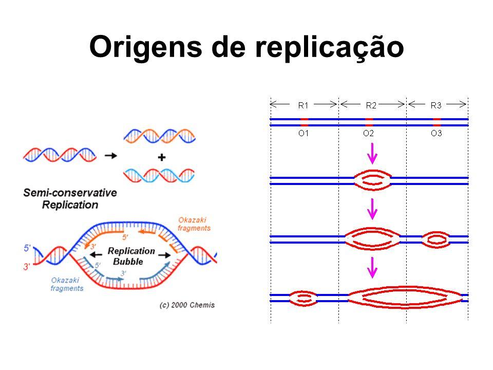 Origens de replicação 7