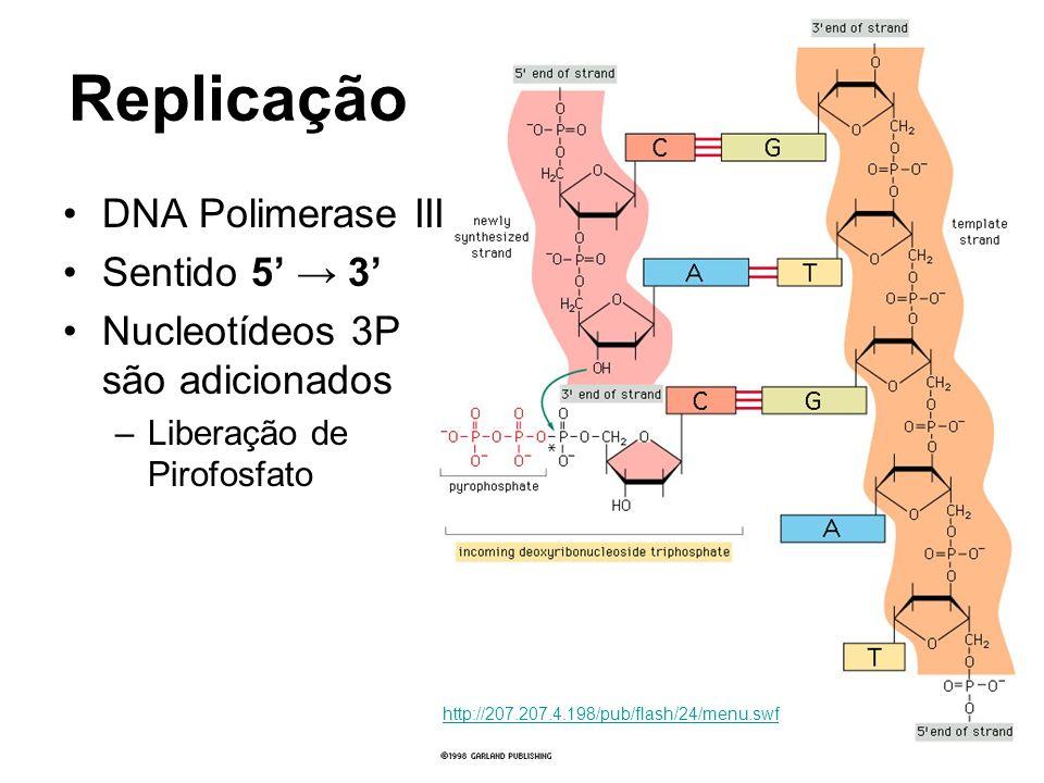 Replicação DNA Polimerase III Sentido 5' → 3'
