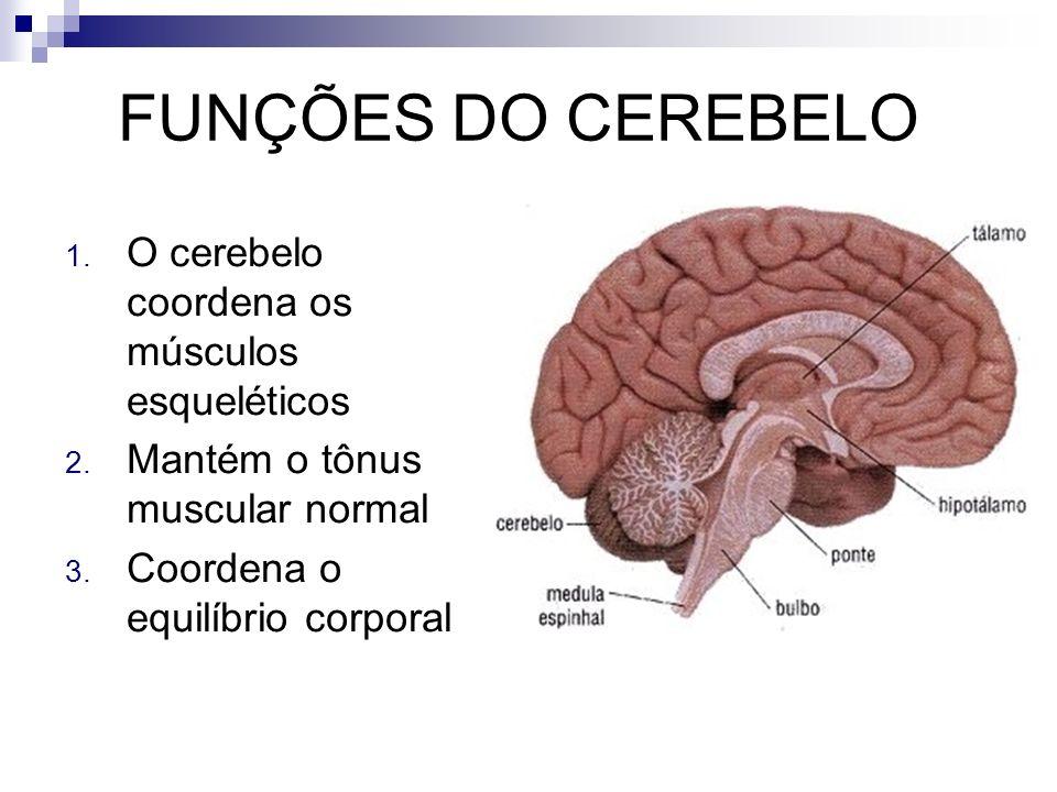 FUNÇÕES DO CEREBELO O cerebelo coordena os músculos esqueléticos