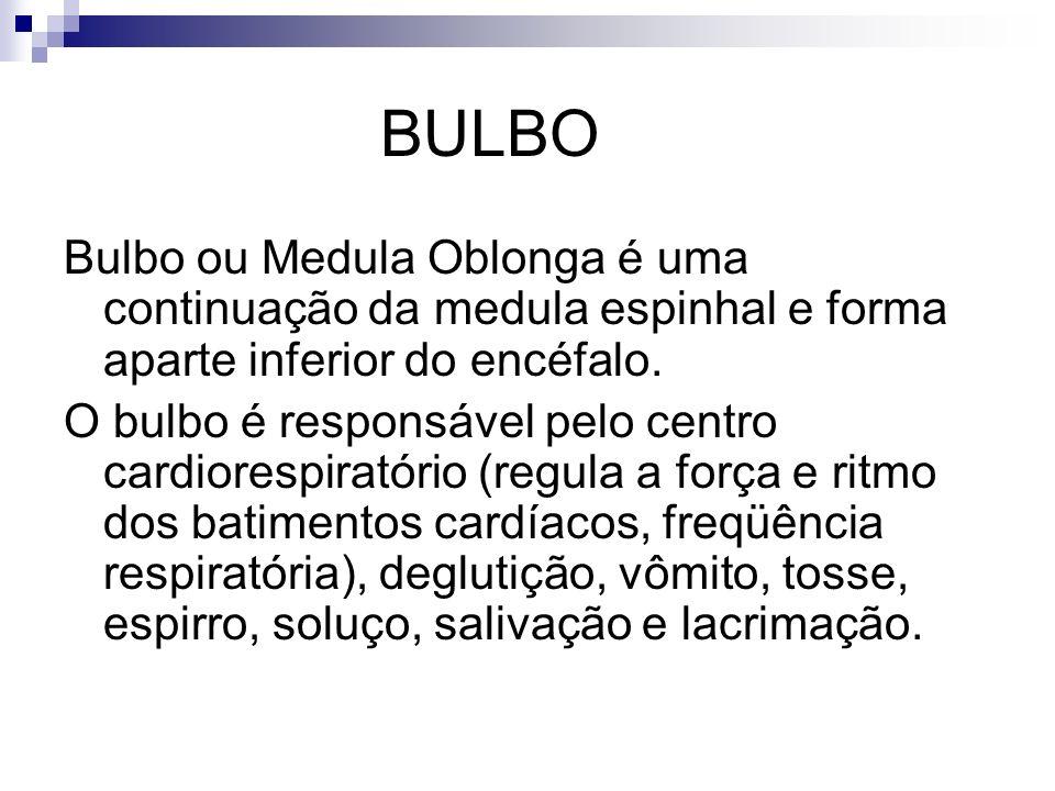 BULBO Bulbo ou Medula Oblonga é uma continuação da medula espinhal e forma aparte inferior do encéfalo.