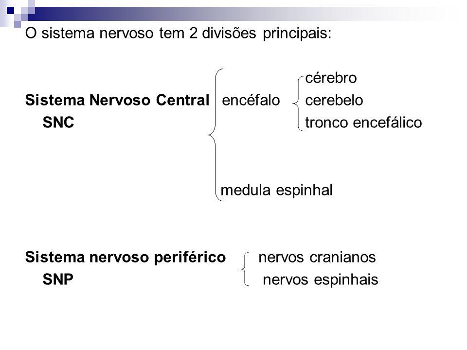 O sistema nervoso tem 2 divisões principais: