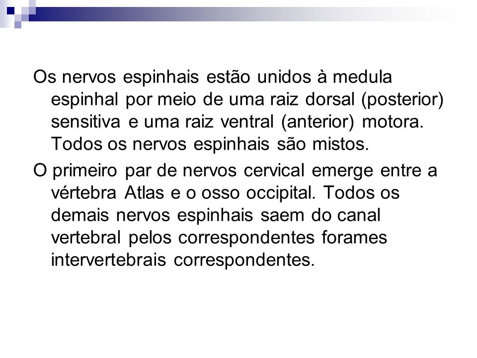 Os nervos espinhais estão unidos à medula espinhal por meio de uma raiz dorsal (posterior) sensitiva e uma raiz ventral (anterior) motora. Todos os nervos espinhais são mistos.