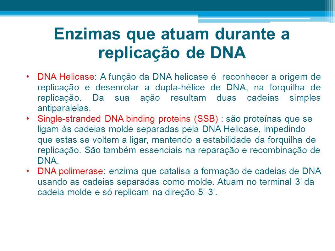 Enzimas que atuam durante a replicação de DNA