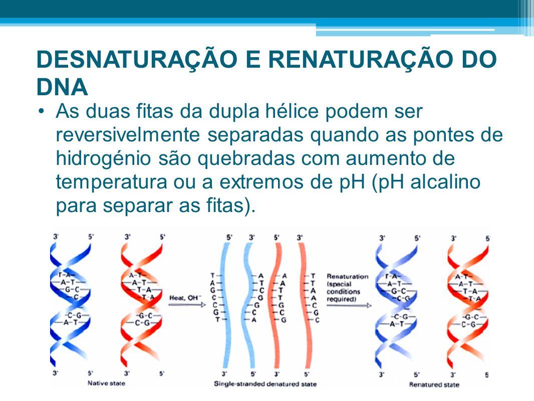 DESNATURAÇÃO E RENATURAÇÃO DO DNA