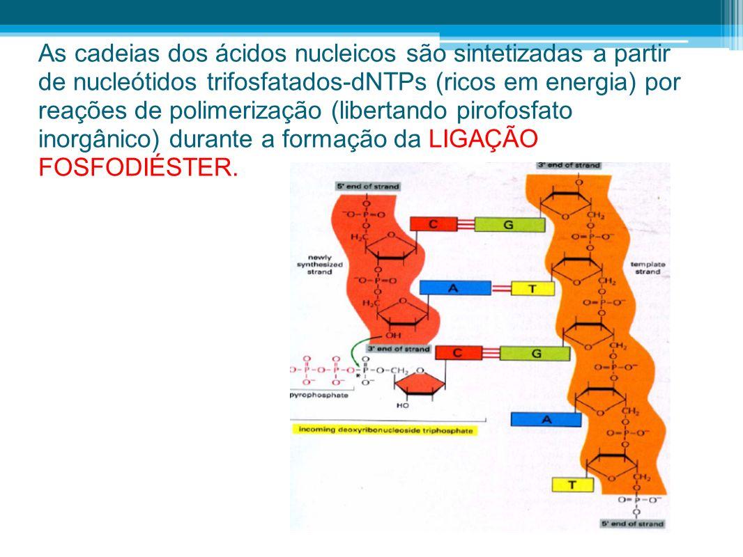 As cadeias dos ácidos nucleicos são sintetizadas a partir de nucleótidos trifosfatados-dNTPs (ricos em energia) por reações de polimerização (libertando pirofosfato inorgânico) durante a formação da LIGAÇÃO FOSFODIÉSTER.