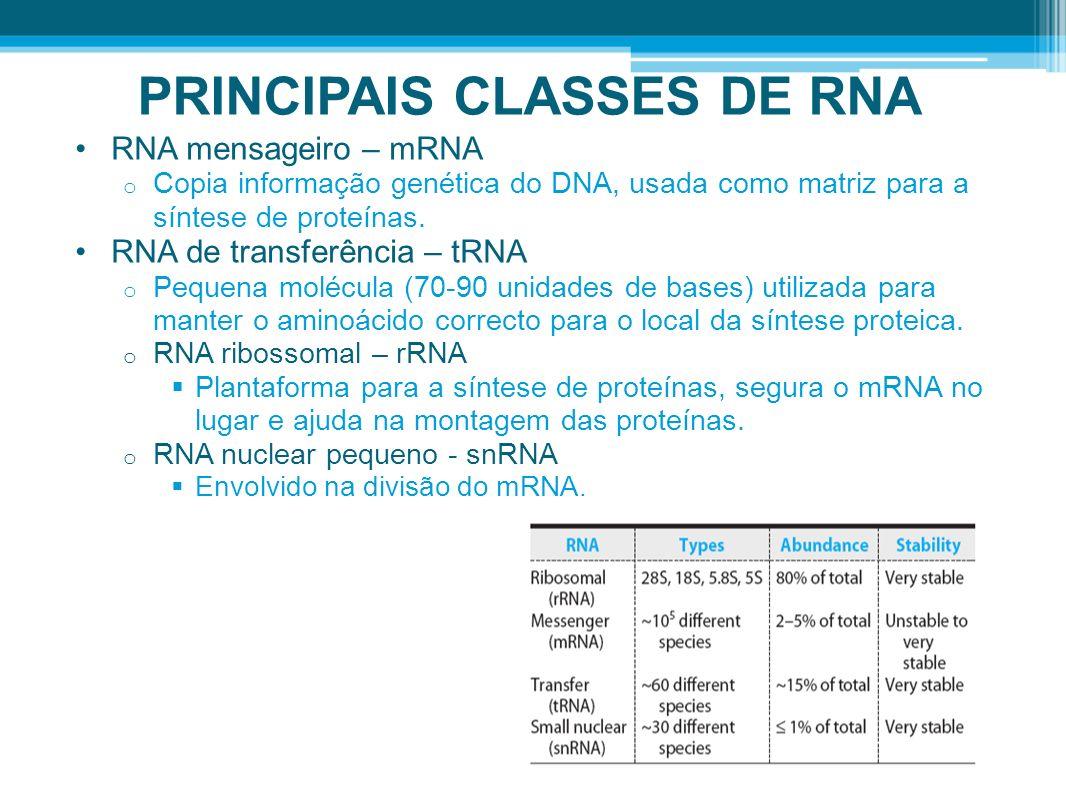 PRINCIPAIS CLASSES DE RNA