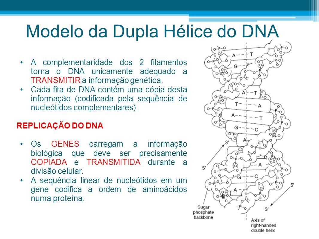 Modelo da Dupla Hélice do DNA