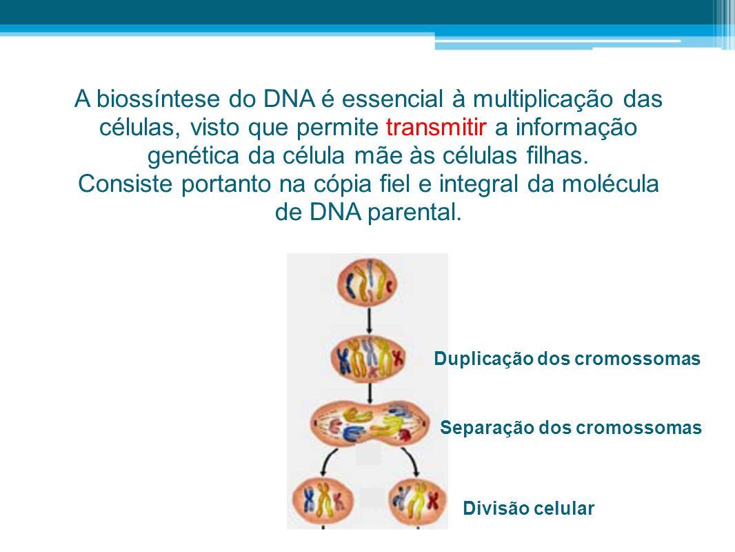 A biossíntese do DNA é essencial à multiplicação das