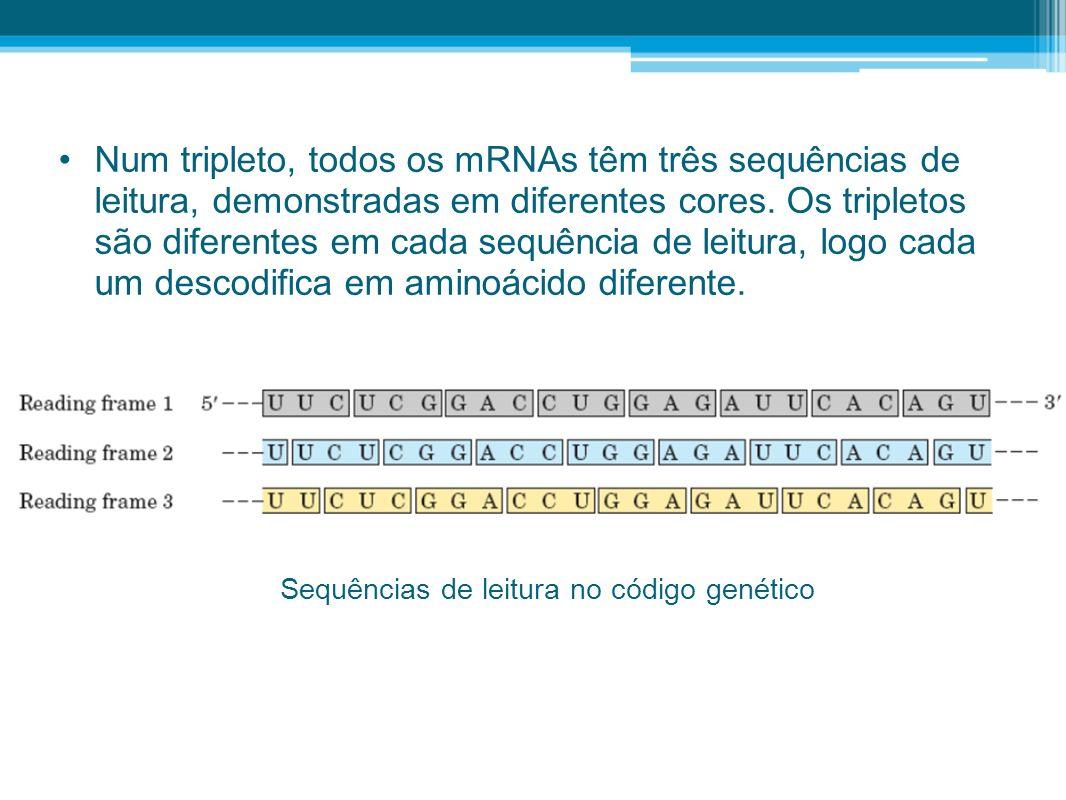 Num tripleto, todos os mRNAs têm três sequências de leitura, demonstradas em diferentes cores. Os tripletos são diferentes em cada sequência de leitura, logo cada um descodifica em aminoácido diferente.