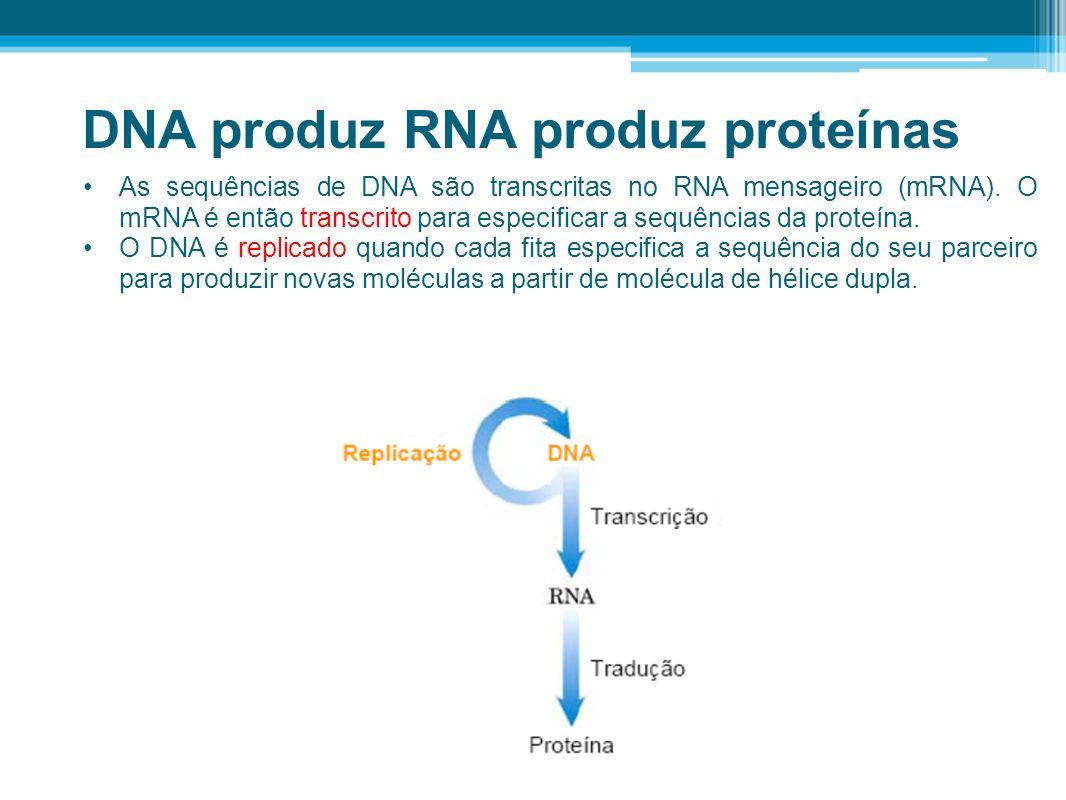 DNA produz RNA produz proteínas