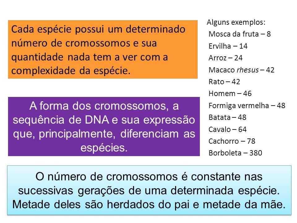 Alguns exemplos: Mosca da fruta – 8. Ervilha – 14. Arroz – 24. Macaco rhesus – 42. Rato – 42. Homem – 46.