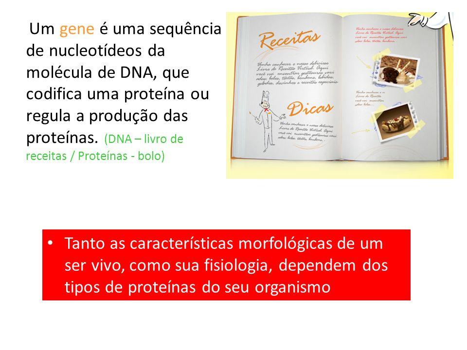 Um gene é uma sequência de nucleotídeos da molécula de DNA, que codifica uma proteína ou regula a produção das proteínas. (DNA – livro de receitas / Proteínas - bolo)