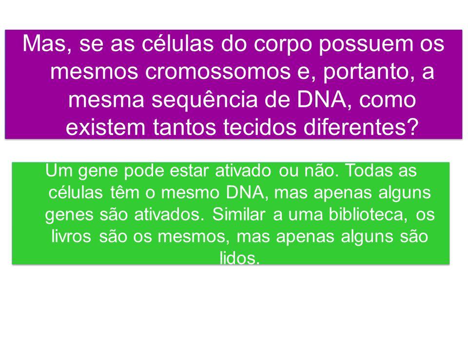 Mas, se as células do corpo possuem os mesmos cromossomos e, portanto, a mesma sequência de DNA, como existem tantos tecidos diferentes