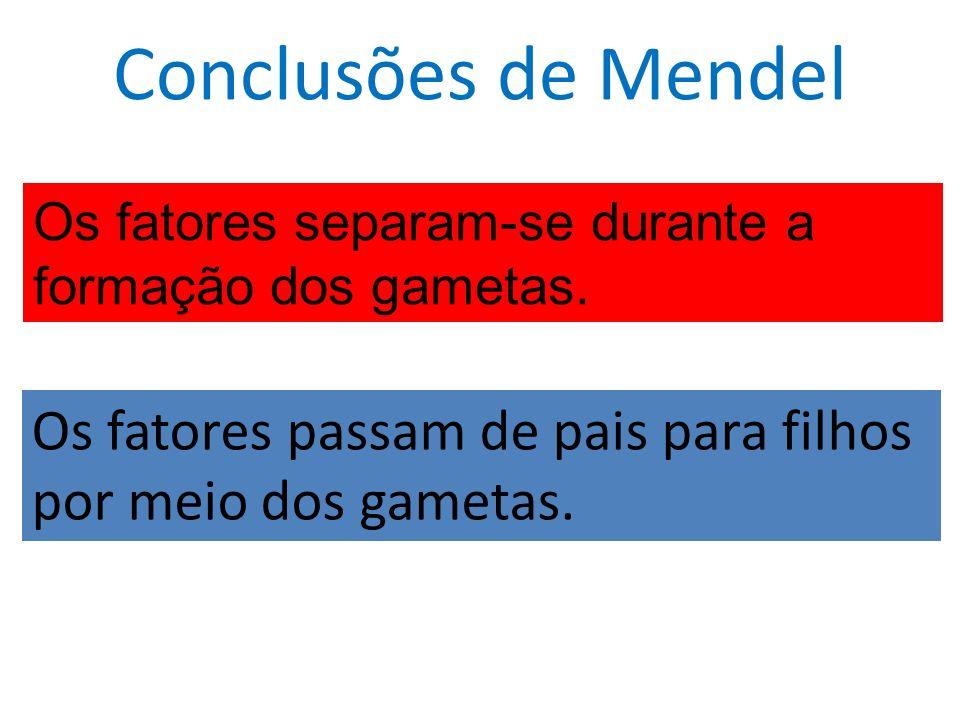 Conclusões de Mendel Os fatores separam-se durante a formação dos gametas.