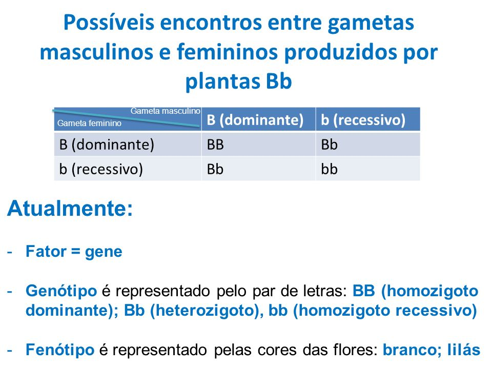 Possíveis encontros entre gametas masculinos e femininos produzidos por plantas Bb