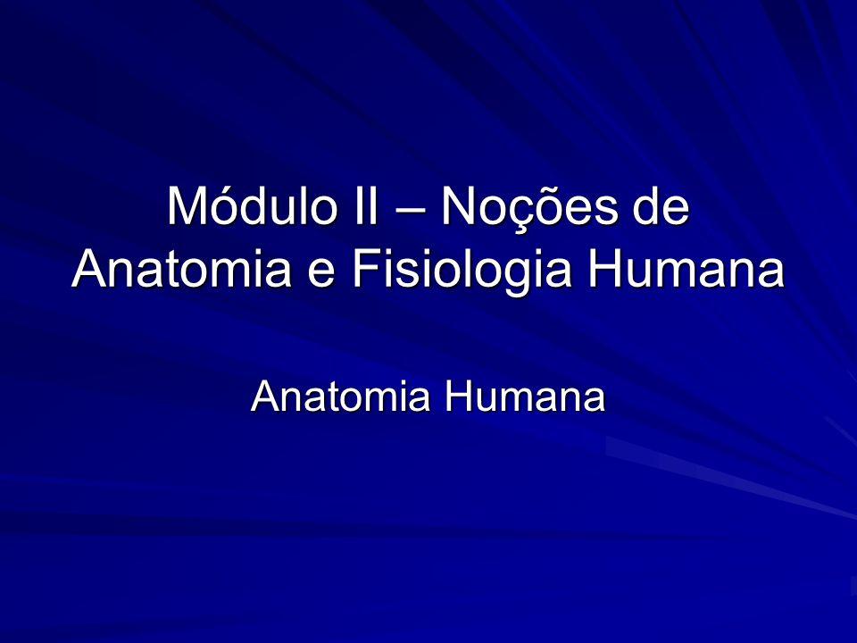 Módulo II – Noções de Anatomia e Fisiologia Humana - ppt video ...