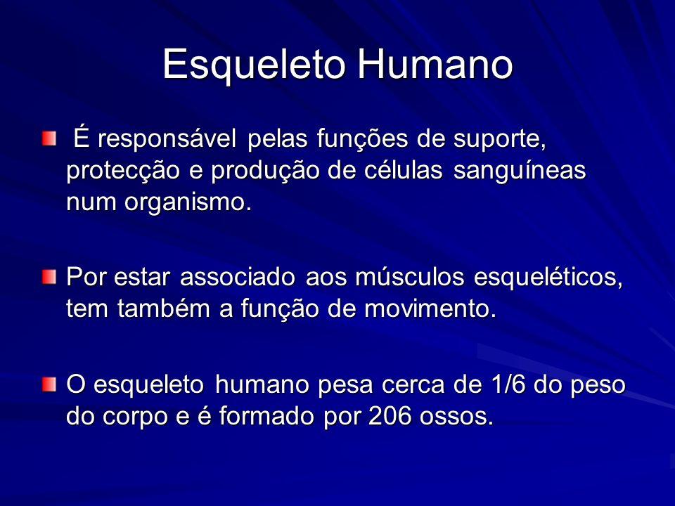Esqueleto Humano É responsável pelas funções de suporte, protecção e produção de células sanguíneas num organismo.