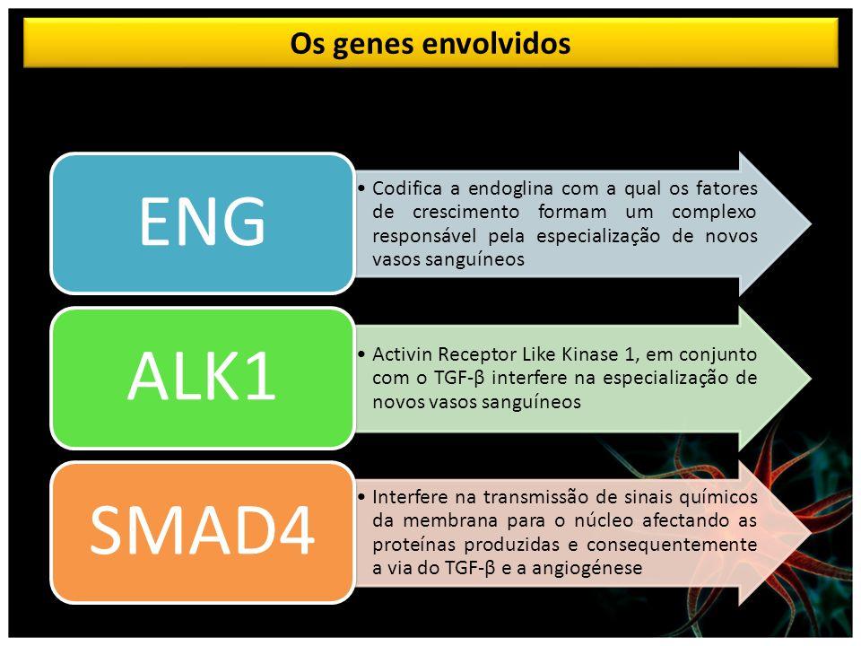 ENG ALK1 SMAD4 Os genes envolvidos