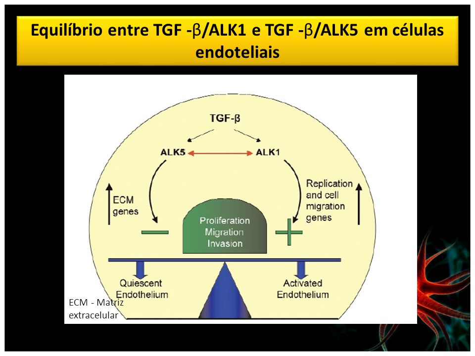Equilíbrio entre TGF -β/ALK1 e TGF -β/ALK5 em células endoteliais