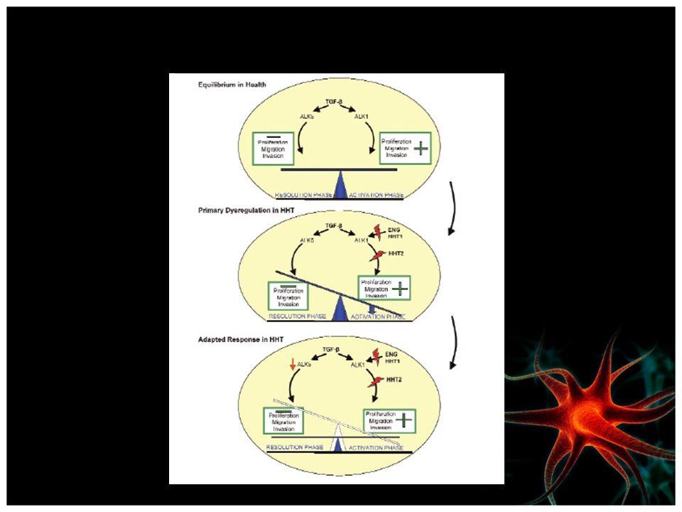 A sinalização equilibrado através TGF-β/ALK1 e TGF-β/ALK5 em células endoteliais saudáveis é quebrado em pacientes HHT.