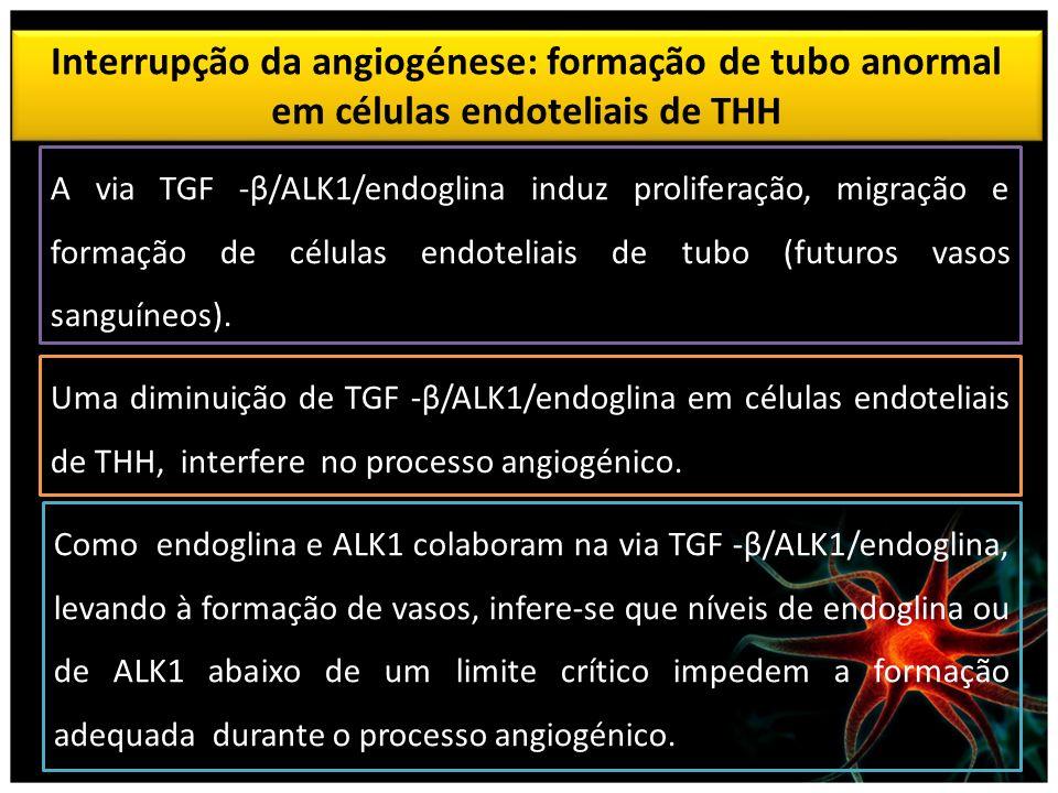 Interrupção da angiogénese: formação de tubo anormal em células endoteliais de THH