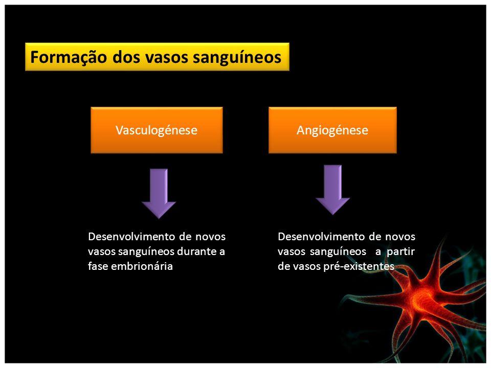 Formação dos vasos sanguíneos