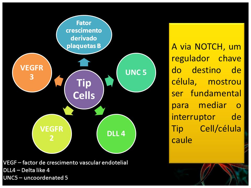 Fator crescimento derivado plaquetas B