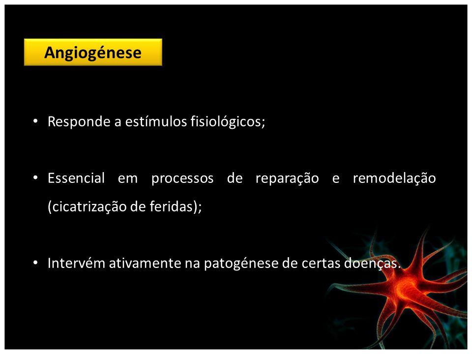 Angiogénese Responde a estímulos fisiológicos;