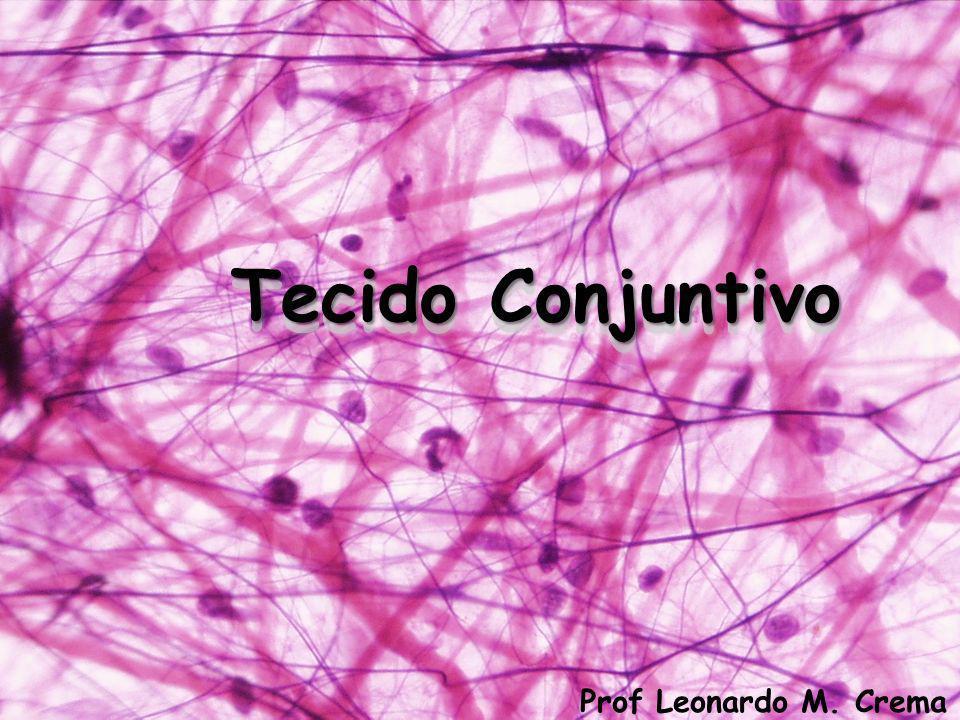 Tecido Conjuntivo Prof Leonardo M. Crema