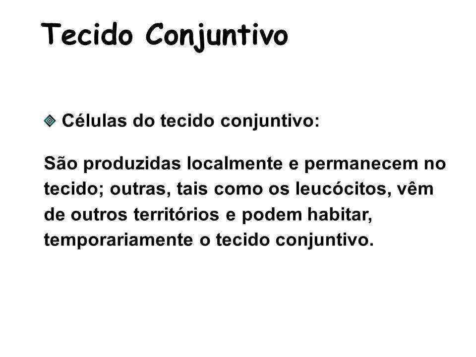 Tecido Conjuntivo Células do tecido conjuntivo: