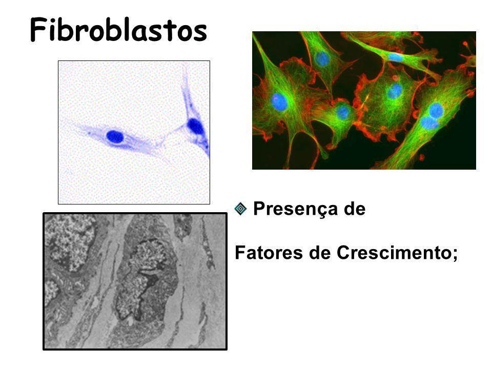 Fibroblastos Presença de Fatores de Crescimento;