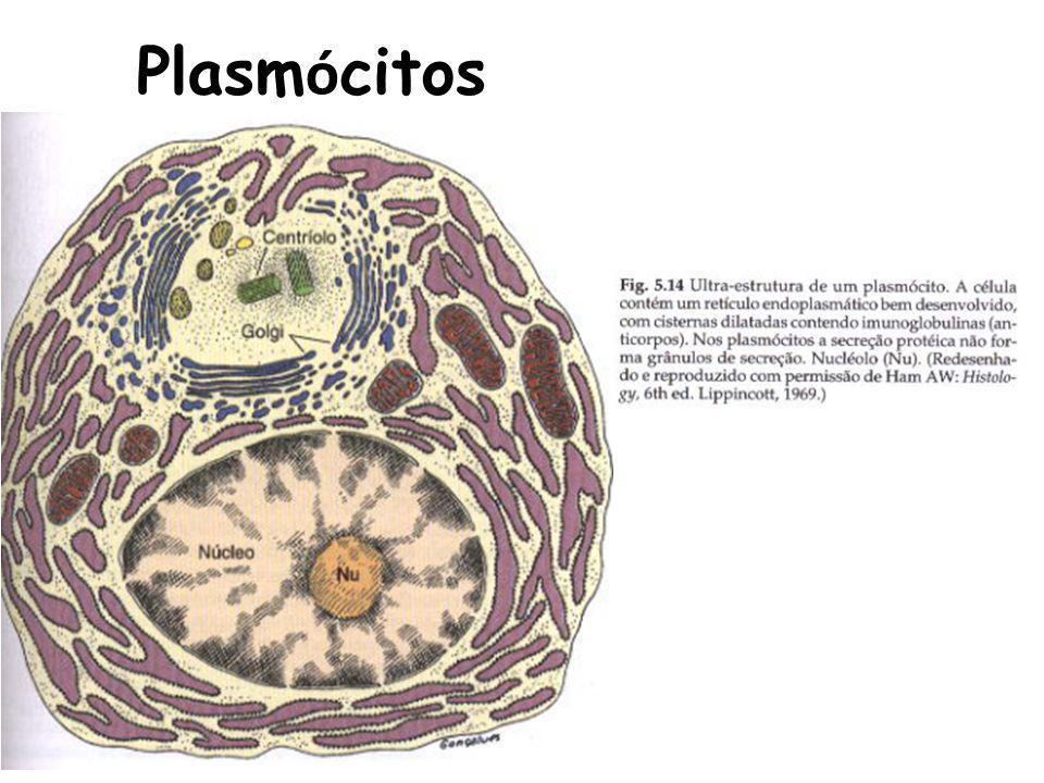 Plasmócitos
