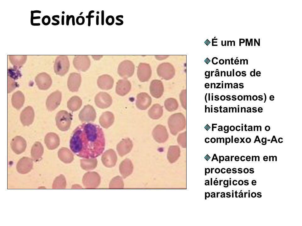 Eosinófilos É um PMN. Contém grânulos de enzimas (lisossomos) e histaminase. Fagocitam o complexo Ag-Ac.