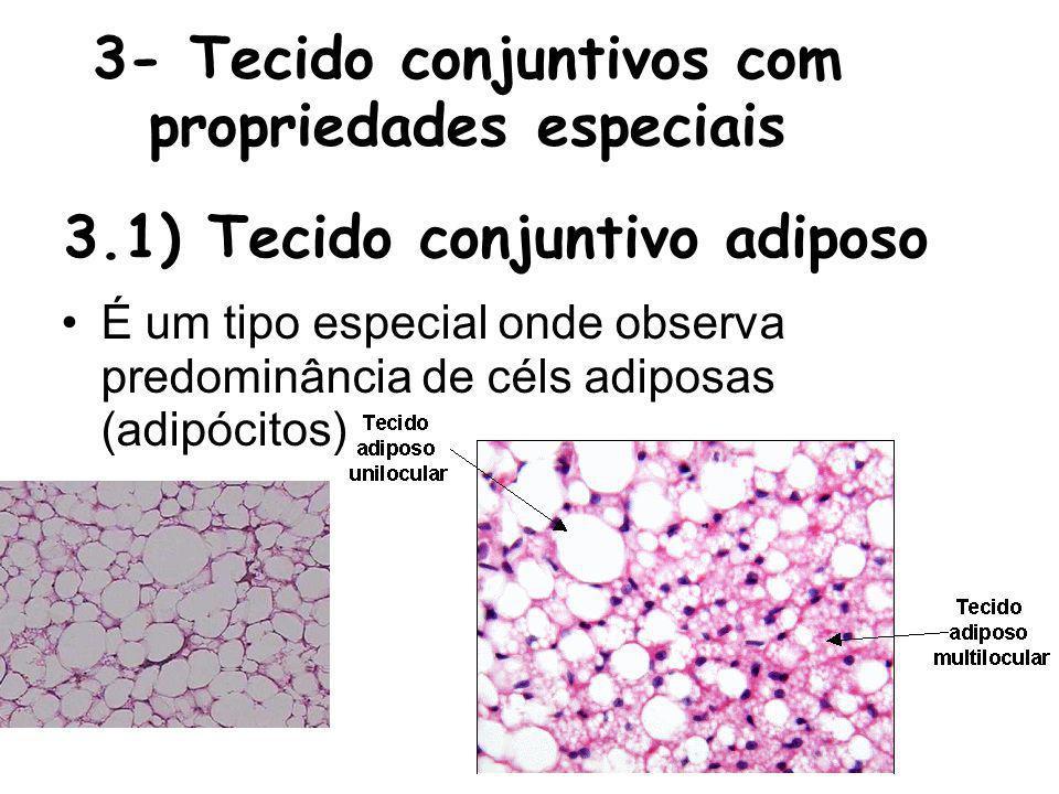 3- Tecido conjuntivos com propriedades especiais