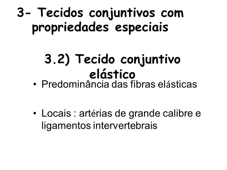 3- Tecidos conjuntivos com propriedades especiais