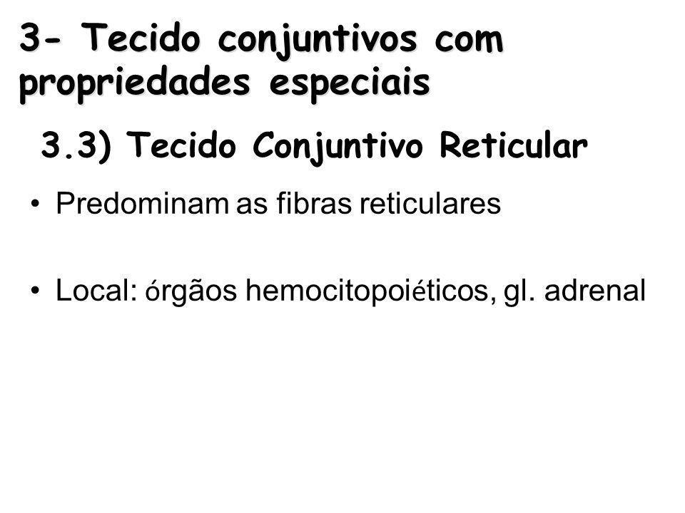 3.3) Tecido Conjuntivo Reticular